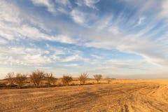 Oase in de Negev-woestijn, Israël stock foto