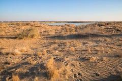Oase in de Woestijn royalty-vrije stock foto