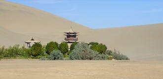 Oase in de woestijn stock fotografie