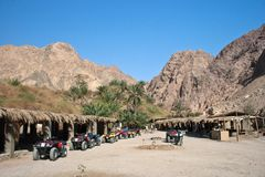 Oase in de woestijn stock foto's