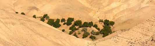 Oase in de Woestijn stock foto