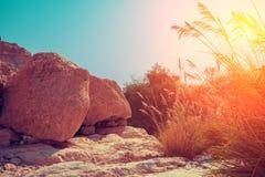 Oase in de Woestijn De reserve van Eingedi stock afbeeldingen