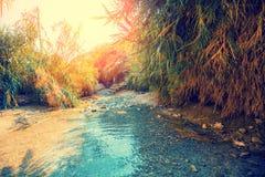 Oase in de Woestijn De rivier van Nahaldavid stock foto