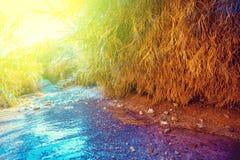 Oase in de Woestijn De rivier van Nahaldavid stock afbeelding