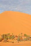 Oase in de woestijn van de Sahara Royalty-vrije Stock Foto's
