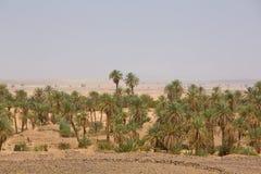 Oase in de woestijn van de Sahara, Tata stock afbeeldingen