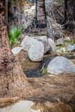 Oase in de woestijn van Joshua Tree National Park royalty-vrije stock foto