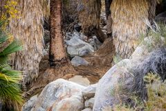Oase in de woestijn van Joshua Tree National Park royalty-vrije stock foto's