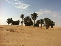 Oase in de woestijn van de Sahara royalty-vrije stock afbeelding