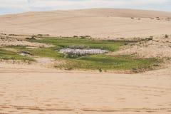Oase in de woestijn, Vietnam royalty-vrije stock foto's