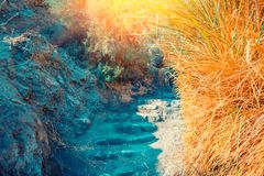 Oase in de Woestijn Weg aan David Waterfall stock afbeelding