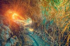 Oase in de Woestijn Weg aan David Waterfall stock fotografie