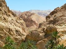 Oase in den Bergen in der Wüste Stockbild