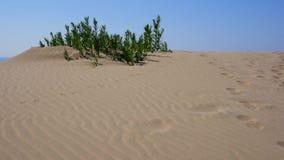 Oase in der Wüste stock video