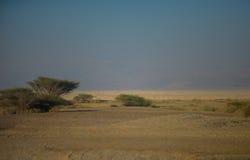 Oase in der Wüste Lizenzfreies Stockbild