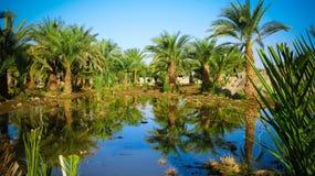Oase dichtbij Derde Cataract van Nijl dichtbij Tombos in de Soedan stock fotografie