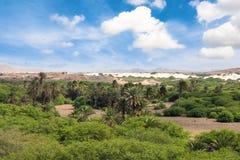Oase dichtbij Viana woestijn, Boavista - Kaapverdië Stock Afbeelding