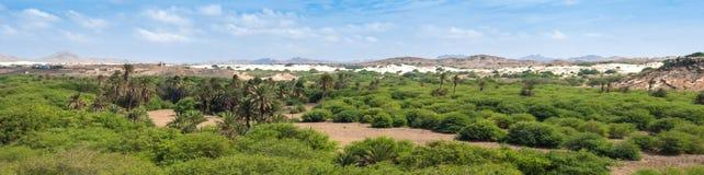 Oase dichtbij Viana woestijn, Boavista - Kaapverdië Stock Foto