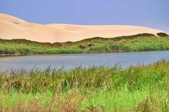 Oase door de zandige duinen wordt omringd dat stock foto