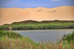 Oase door de zandige duinen wordt omringd dat royalty-vrije stock afbeeldingen