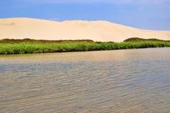 Oase door de zandige duinen wordt omringd dat stock afbeelding