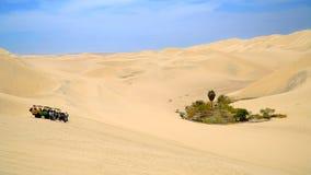 Oase in einer Wüste stockfoto