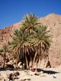 Oase in einer Wüste lizenzfreie stockfotos