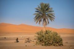 Oase in Hassilabied, Erg Chebbi, Moroco stock afbeeldingen
