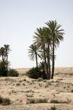 Oase met palmen Royalty-vrije Stock Fotografie