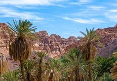 Oase met palmen in de woestijn onder de hoge rotsachtige bergen in van Zuid- Egypte Dahab Sinai royalty-vrije stock afbeelding