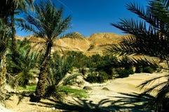 Oase - Palmen in de woestijn Stock Foto's