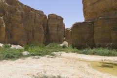 Oase in Tunesië stock fotografie