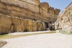 Oase in Tunesië royalty-vrije stock foto
