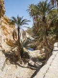 Oase in Tunesië royalty-vrije stock foto's