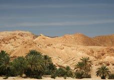 Oase in Tunesien lizenzfreie stockfotografie