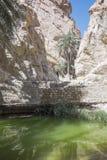 Oase in Tunesien Stockbild