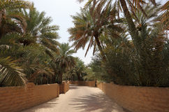 Oase van Al Ain, Abu Dhabi stock afbeelding