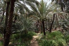 Oase van Al Ain, Abu Dhabi royalty-vrije stock afbeelding