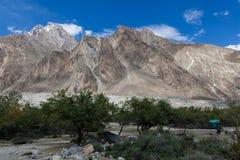 Oase von grünen Bäumen auf dem Weg zum niedrigen Lager K2 mit Baltoro-Gletscher lizenzfreies stockbild