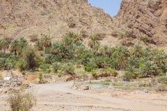 Oase in Wadi Al-Abraeen royalty-vrije stock afbeelding