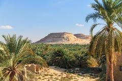 Oase in Woestijn royalty-vrije stock afbeelding