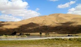 Oase in woestijn stock foto's