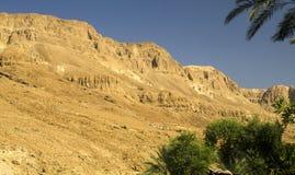 Oase in Woestijn Judean stock foto's