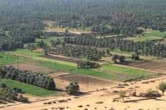 Oasen Kerma i Sahara i Sudan Arkivfoto