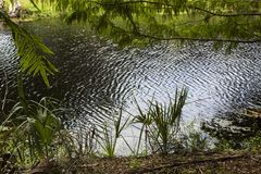 oasi Fotografie Stock Libere da Diritti