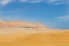 Oasi con le montagne ed il deserto in Israele Fotografia Stock Libera da Diritti