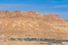 Oasi con le montagne in Israele Immagine Stock