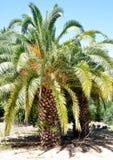 Oasi della palma Immagini Stock Libere da Diritti