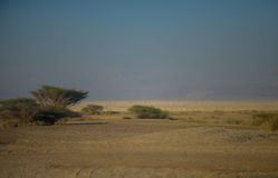 Oasi in deserto immagine stock libera da diritti