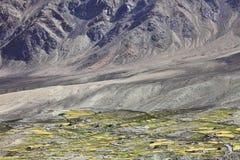 Oasi Himalayan Fotografia Stock
